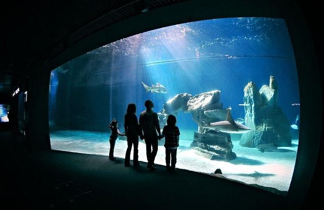 Apre all'Acquario di Genova la nuova casa dei delfini!