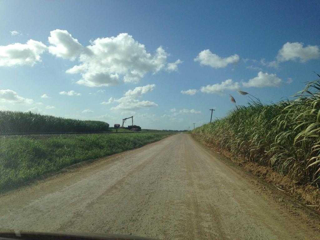Alla scoperta delle piantagioni di canna da zucchero in Repubblica Dominicana