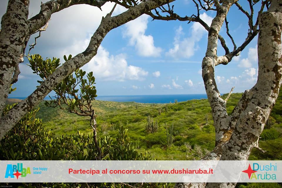 Rispondi alle domande e vinci un viaggio ad Aruba!