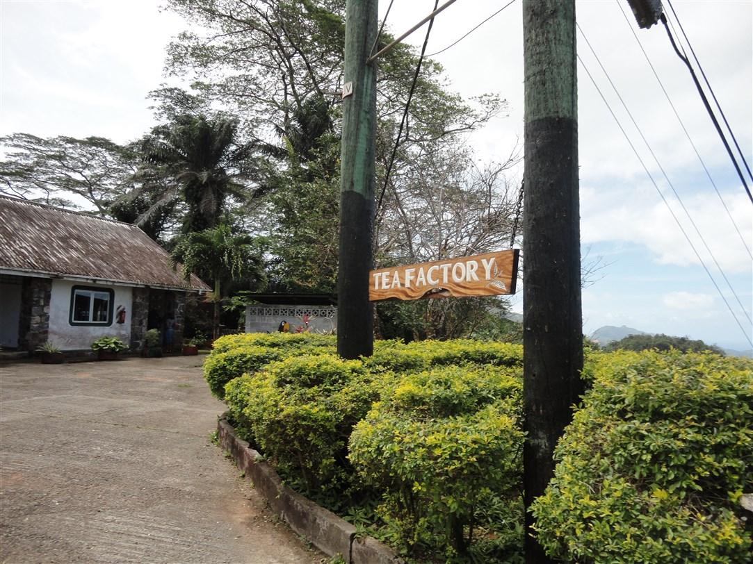 La Tea Factory: una visita all'antica fabbrica del tè alle Seychelles