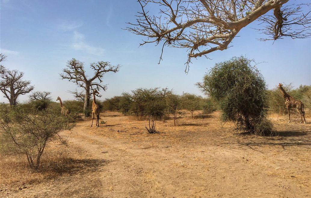 La riserva di Bandia in Senegal