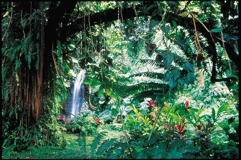 Isole di Tahiti: i suoi giardini botanici e gli incantevoli percorsi nel verde
