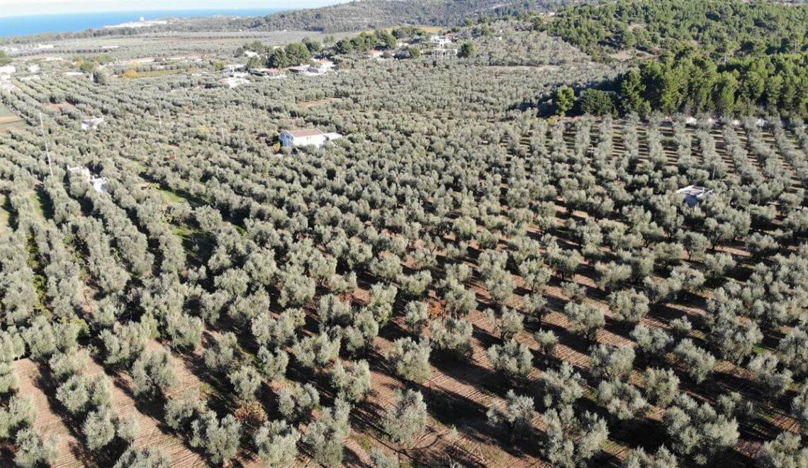 Visitare un frantoio in Puglia per scoprire la produzione dell'olio